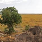 safari_14