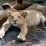 safari_16