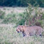 safari_20