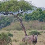 safari_21