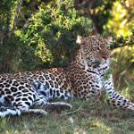 safari_23