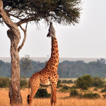 safari_24