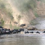 safari_25