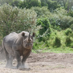 safari_27