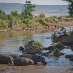 safari_29