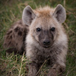 safari_31