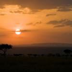 safari_32