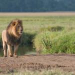 safari_33