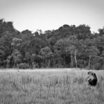 safari_34