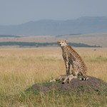 safari_36
