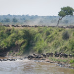 safari_37