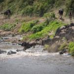 safari_38