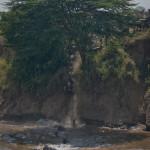 safari_41