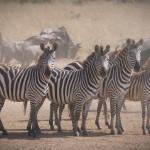 safari_42