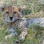 safari_43