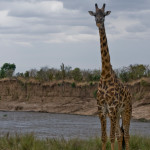 safari_46