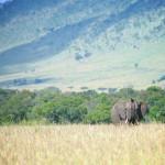 safari_49