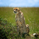 safari_53