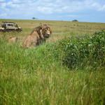 safari_55