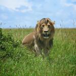 safari_56