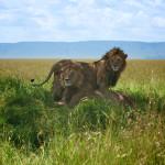 safari_57