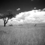 safari_59