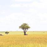 safari_60