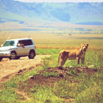 safari_61