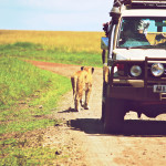 safari_62