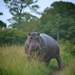 safari_64
