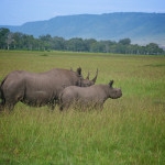 safari_65
