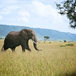 safari_66