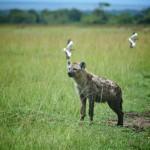 safari_68