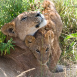 safari_8