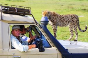 AMS Safaris
